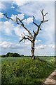 TQ4058 : Dead tree by Ian Capper