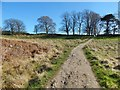 NS5379 : West Highland Way near Easter Carbeth by Lairich Rig