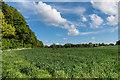 TQ4059 : Towards Norheads Farm Cottage by Ian Capper