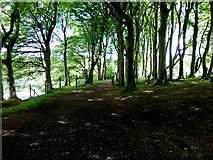 H5776 : Wooded area, Loughmacrory by Kenneth  Allen