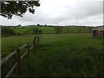 SX6195 : Near Alfordon on the Devonshire Heartland Way by David Smith