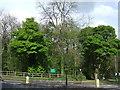 SK3282 : Ecclesall Wood by JThomas
