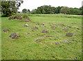 ST5571 : Pets' cemetery by Neil Owen