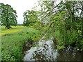 SU1256 : River Avon, downstream [east] of Rushall Bridge by Christine Johnstone