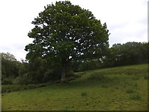 SX6397 : Devonshire Heartland Way at Aller by David Smith