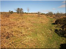 SX7473 : Rushlade Common by Derek Harper