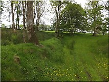 SX6497 : Sunken track; part of a footpath near Halford by David Smith