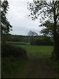 SX6597 : Grassland in the valley of the River Taw, Halford by David Smith