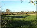 SP0476 : Nettles in a field near Big Forhill Farm by Robin Stott