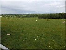 SX6597 : Woodland north of Wyke Moor Cross by David Smith