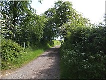 SX6697 : The lane and path named Cocktree Throat by David Smith