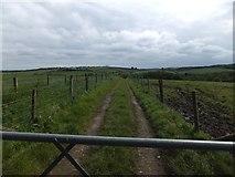 SX6698 : Farm track at North Wyke by David Smith