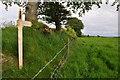 SS9129 : West Somerset : Grassy Field by Lewis Clarke