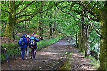 NS0964 : Path in Bogany Wood, Rothesay by Jim Barton
