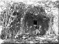 TG1600 : Dilapidated building at RAF Hethel by Evelyn Simak