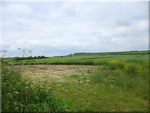 SU1420 : Breamore, rape field by Mike Faherty