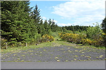 NX6190 : Forest Track near Bell's Craig by Billy McCrorie