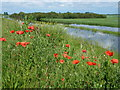 TL4583 : Colourful river bank - The Ouse Washes near Mepal by Richard Humphrey