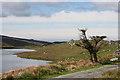 G5888 : Tree by Kiltyfanned Lough by Anne Burgess