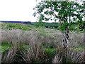 G9731 : Rushy ground, Tullynamoyle by Kenneth  Allen
