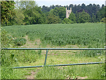 SK5451 : Papplewick church from Linby Lane by Alan Murray-Rust