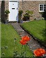 SK5451 : Cottage garden with poppies by Alan Murray-Rust