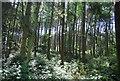 TQ1834 : Graylands Plantation by N Chadwick