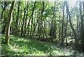 TQ1834 : Morris's Wood by N Chadwick
