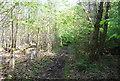 TQ1834 : Footpath, Morris's Wood by N Chadwick