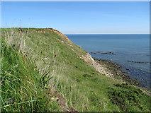 TA0390 : Headland profile by Pauline E