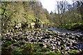 NZ0712 : River Greta, Nr Brignall by Paul Buckingham