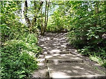 SJ9594 : Steps out of Gower Hey Wood by Gerald England