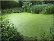 TQ1665 : Pond on Stokes Field, Long Ditton by David Howard