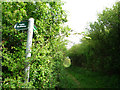 TL1299 : Signpost at end of Cow Lane by Kim Fyson