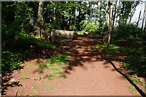 SX8760 : Path in Primly Park by jeff collins