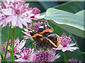 SE8675 : Red Admiral butterfly, showing underwing by Pauline E