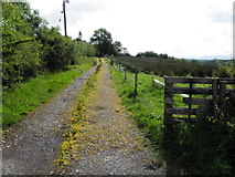G9226 : Rough lane, Corcormick by Kenneth  Allen