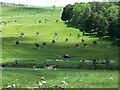 NY5222 : Hillside below Burtree Scar by Oliver Dixon