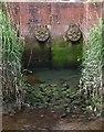 SX8671 : Outflows into River Lemon, Newton Abbot by Derek Harper
