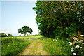 SO4460 : Course of old railway, Kingsland by John Winder
