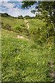 TQ2451 : The Saddle Knob by Ian Capper
