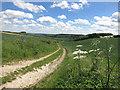 SU5680 : Towards Westridge Copse by Des Blenkinsopp