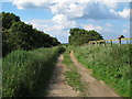 TG4322 : Track through the marshes, Hickling by Roger Jones