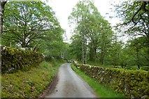 NY3204 : Path through Sawrey's Wood by DS Pugh