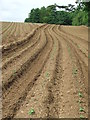TM2844 : Ploughed Field by Keith Evans