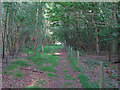 TM4670 : Path in Dunwich Forest by Roger Jones