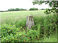 TF9906 : Triangulation pillar at a field's edge by Evelyn Simak
