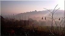 SX3384 : Launceston Castle in the mist by Paul Loft