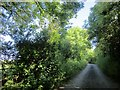 SX3957 : Lane to Elm Gate by Derek Harper
