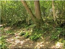 SX5360 : Woodland track, edge of Cann Wood by Derek Harper
